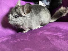 Nager Kleintiere Inserate Und Kleinanzeigen Kaufen Verkaufen